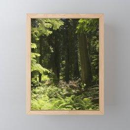 Cedar Forest Mystery Framed Mini Art Print