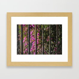 Garden Gate Framed Art Print