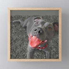 PACO (shelter pup) Framed Mini Art Print