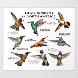 Hummingbirds of North America Art Print