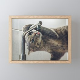 Funny Cat Drinking Water From Faucet Framed Mini Art Print
