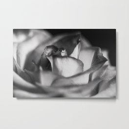 A Rose Of A Different Color Metal Print