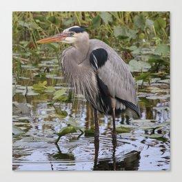 A great blue heron Canvas Print