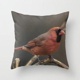 Red cardinal 7686 Throw Pillow