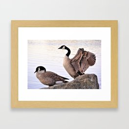 Mated Pair of Canadian Geese by Reay of Light Photography Framed Art Print