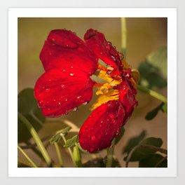 Raindrops on Flower 1 Art Print