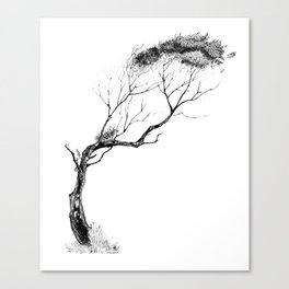Tree Pen & Ink Canvas Print