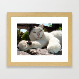 Black and White Bicolor Cat Lounging on A Park Bench Framed Art Print