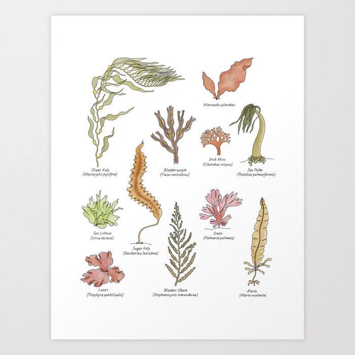 Seaweeds Art Print