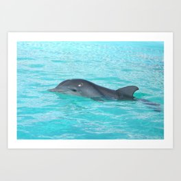 Baby Dolphin Coming up for air Art Print