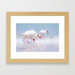 White Egret Feeding #1 Framed Art Print