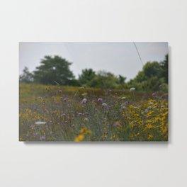 Appalachian Wildflowers Metal Print