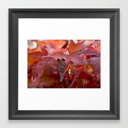 Autumnally Sad Framed Art Print