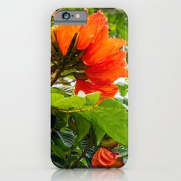 Stunning  flowers of African Tulip Tree at a beach in New Caledonia iPhone Case