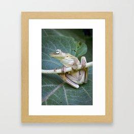 Nature - Frog Photography Framed Art Print