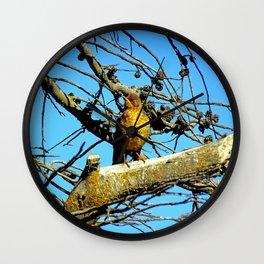 Falkland Island Thrush Wall Clock