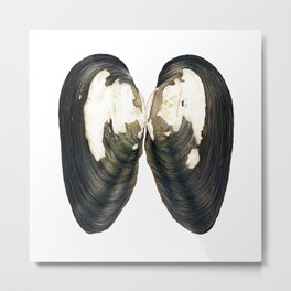 Thick Shelled River Mussel (Unio crassus) Metal Print