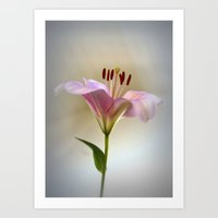 lily Art Prints featuring Lily by Brian Raggatt