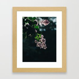 Sun Dazed Framed Art Print