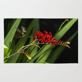 Rufous Hummingbird 2 Rug