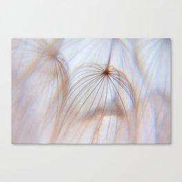 Dandelion Art of the Nature Canvas Print