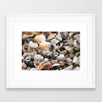 shells Framed Art Prints featuring Shells by BACK to THE ROOTS
