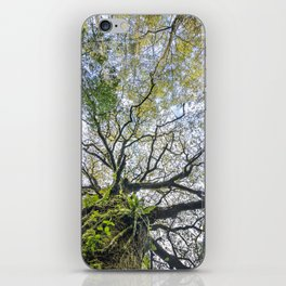 Centenary oak with the trunk covered in moss and green plants iPhone Skin