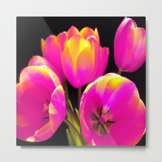 Colours Tulips Metal Print