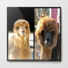 Theres something about an Alpaca Metal Print