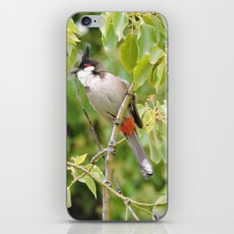 Red-Whiskered Bulbul -- 2 iPhone Skin
