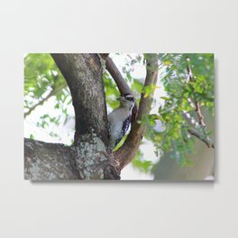 Woodpecker in a Park Tree Metal Print