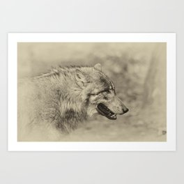 lonesome wolf Art Print