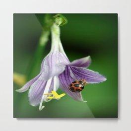 Ladybug and Flower Metal Print