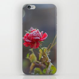 Rose in the frost iPhone Skin