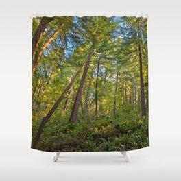 Muir Woods Shower Curtain