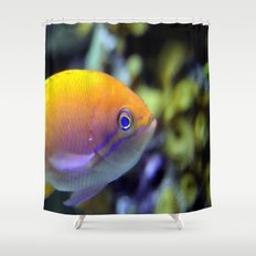 Hey fish!  Shower Curtain