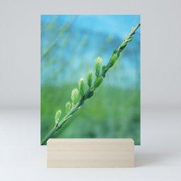 willow catkin Mini Art Print