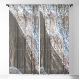 Old Olive Tree wood Sheer Curtain