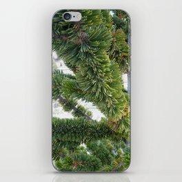 Bristlecone pine needles iPhone Skin