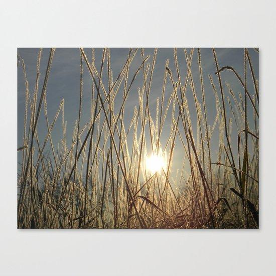 field of glitter Canvas Print