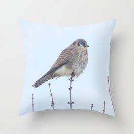 Female Kestrel (Sparrowhawk) 15 Throw Pillow
