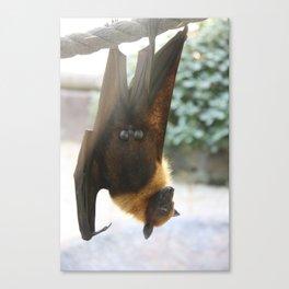 Exhibitionist Bat  Canvas Print