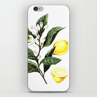 lemon iPhone & iPod Skins featuring Lemon by Anna Yudina
