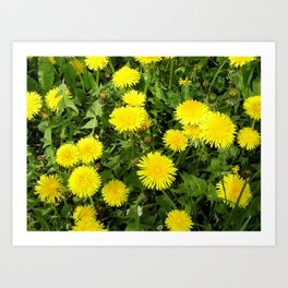 Dandelion Spring Art Print
