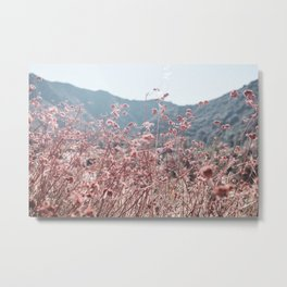 California Pink Flowers Metal Print