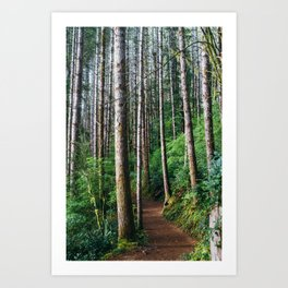 Trees: III // Oregon Art Print