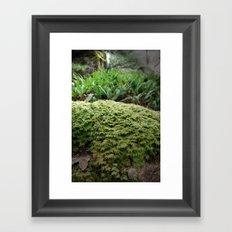 plant moss texture Framed Art Print
