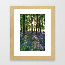 Bluebell Woods at Sunrise Framed Art Print
