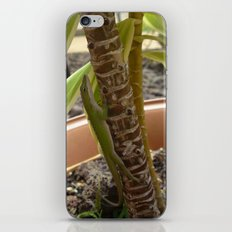 Anole Friend iPhone & iPod Skin