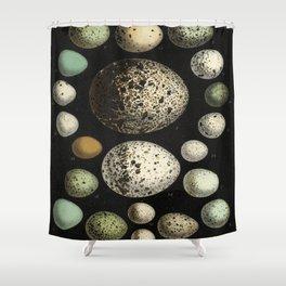 Naturalist Eggs Shower Curtain